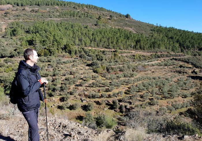 Campo de olivos al poco de salir de Herguijuela de la Sierra
