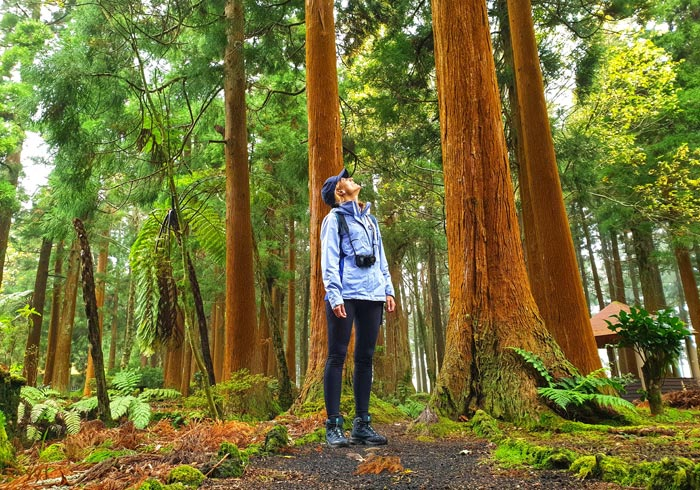 Reserva forestal Sete Fontes Sao Jorge Azores