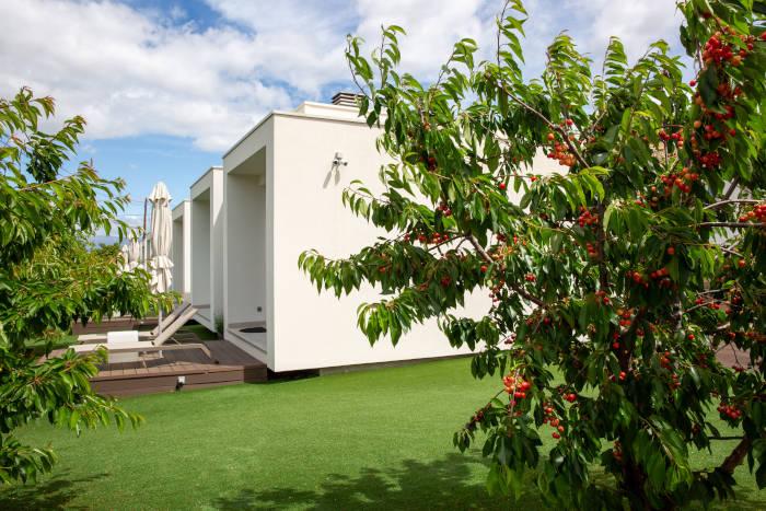 Frutos del cerezo en el jardín de Cerca Design House